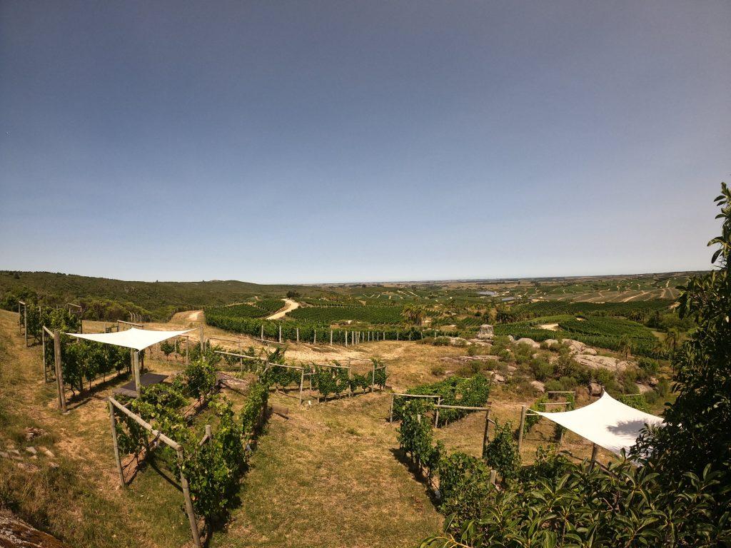 uruguay tour vino degustazione