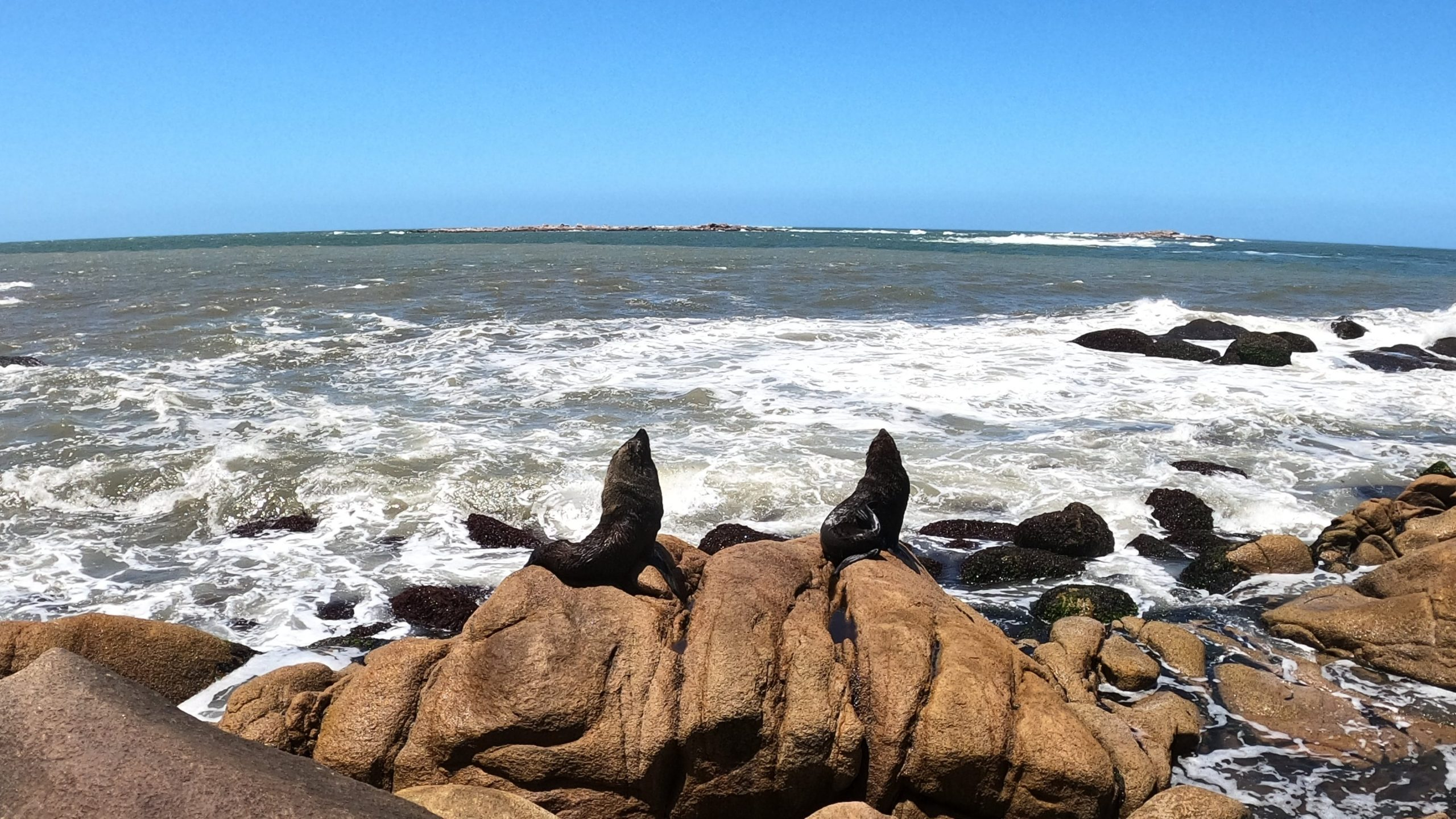 cabo polonio lupi marini