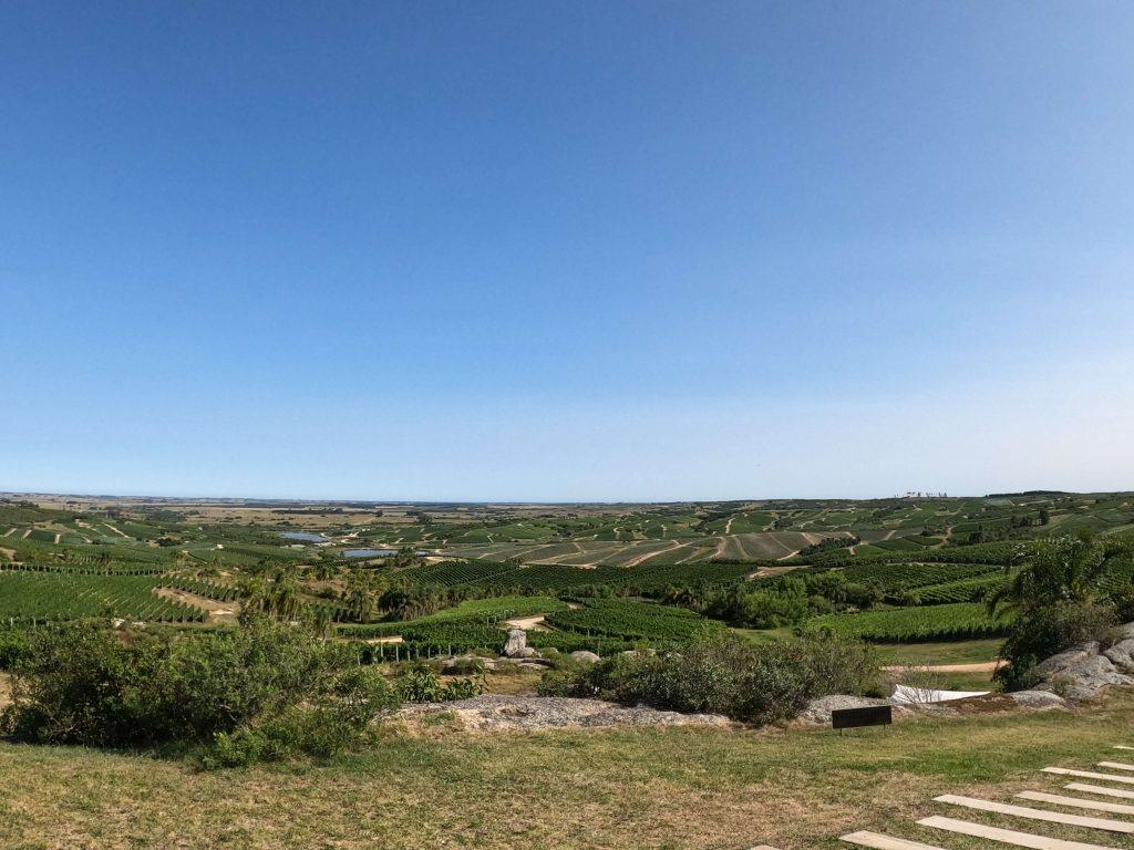 Uruguay tour degustazione vini Bodega Garzón