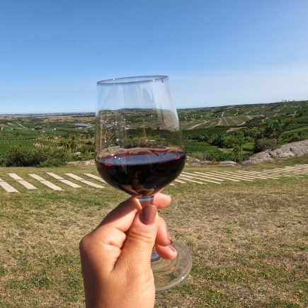 uruguay tour degustazione vino